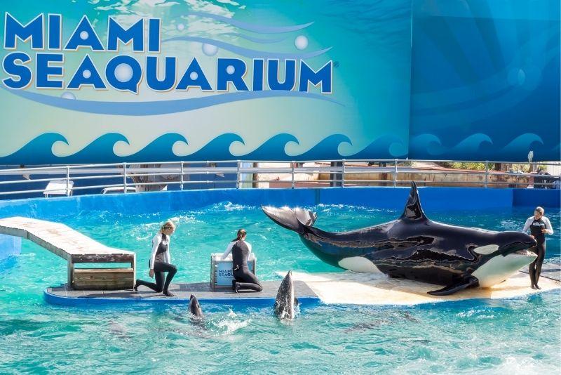 Acuario Miami Seaquarium, Florida