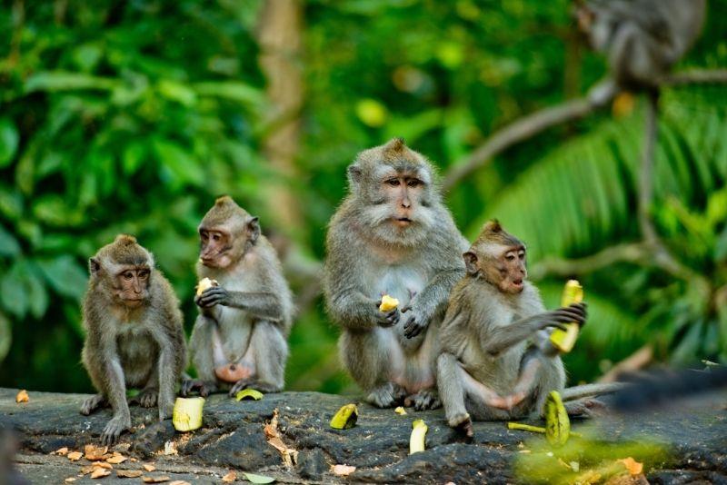 Monkey Jungle, Miami, Florida