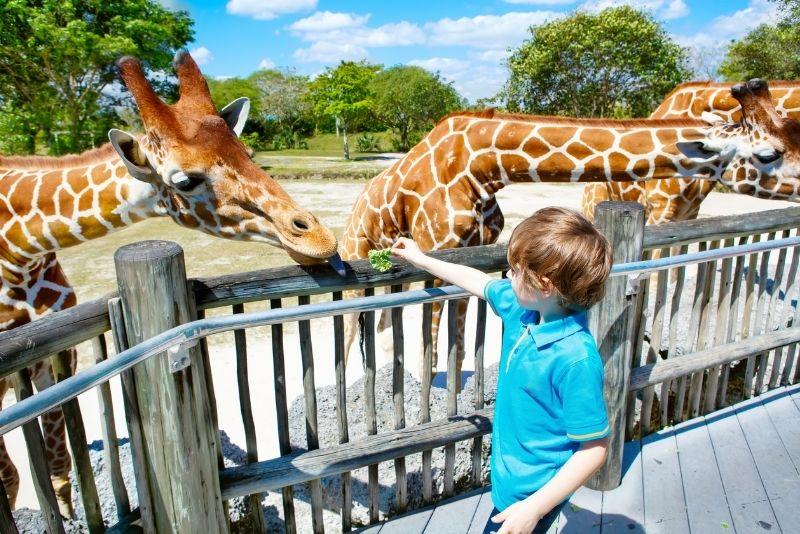 Zoológico de Miami, Florida