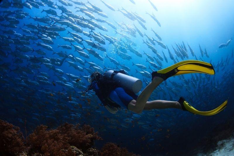 diving in San Diego, California