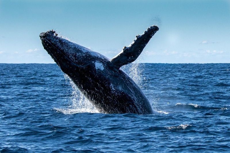 whale watching in San Diego, California