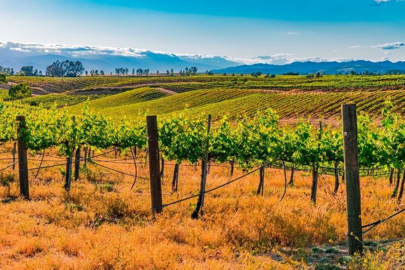 wine tour in Temecula, California