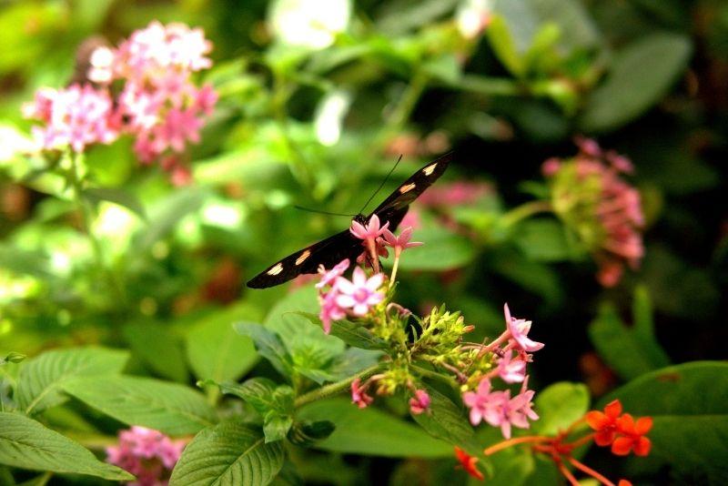 Audubon Butterfly Garden & Insectarium, New Orleans