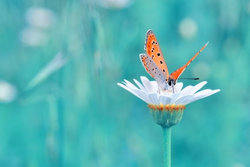 Butterfly World, Coconut Creek, Florida