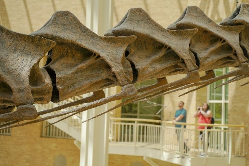 Fernbank Museum Of Natural History, Atlanta