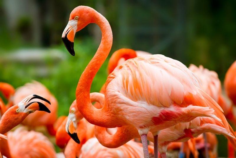 Flamingo Gardens, Fort Lauderdale