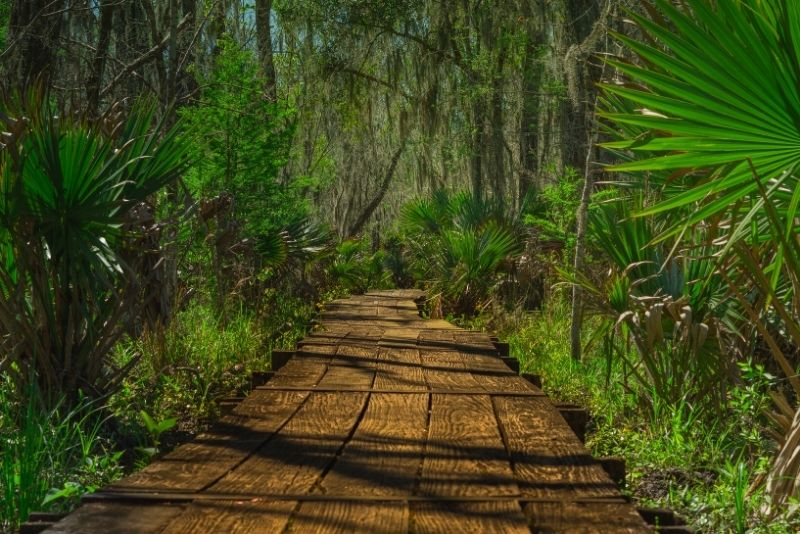 Jean Lafitte National Historical Park And Preserve near New Orleans