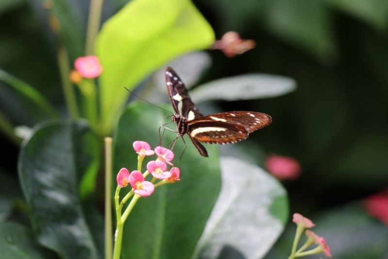 Key West Butterfly and Nature Conservatory, Florida