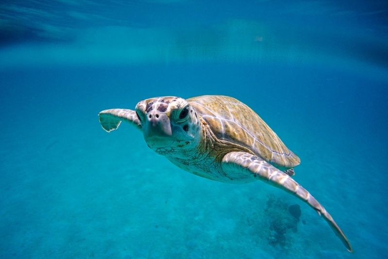 Key West Turtle Museum, Florida