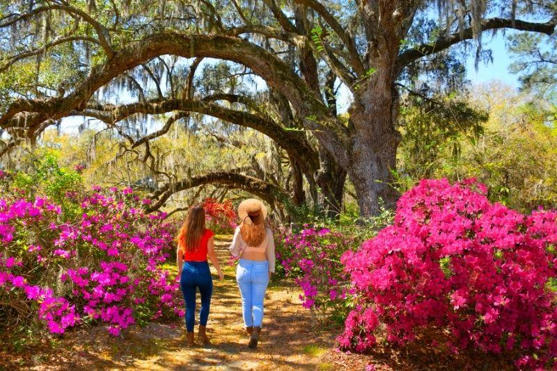 Magnolia Plantation & Gardens, Charleston