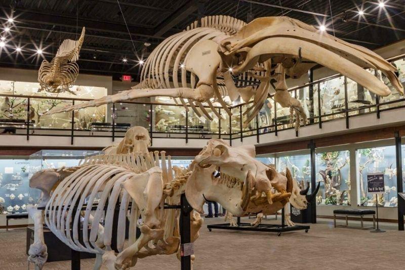 Museum Of Osteology, Orlando