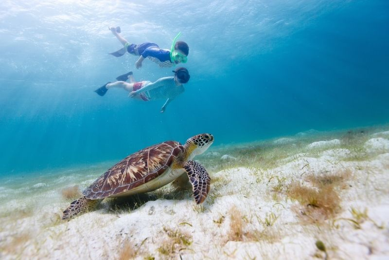snorkeling with turtles, Cancun, Mexico
