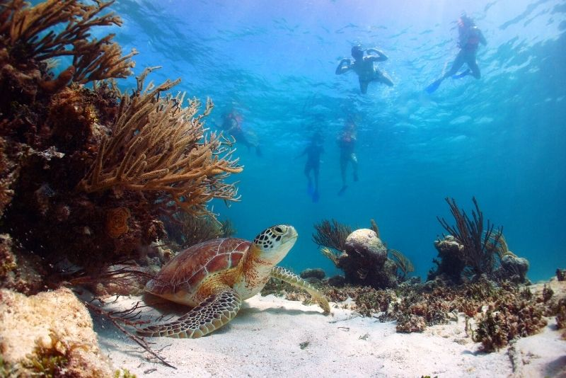 snorkeling with turtles in Cancun, Mexico