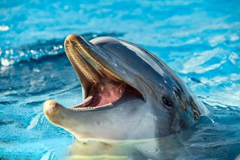 swim with dolphins at Isla Mujeres, Mexico