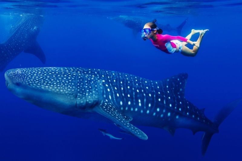 swimming with whale shark in Cancun, Mexico