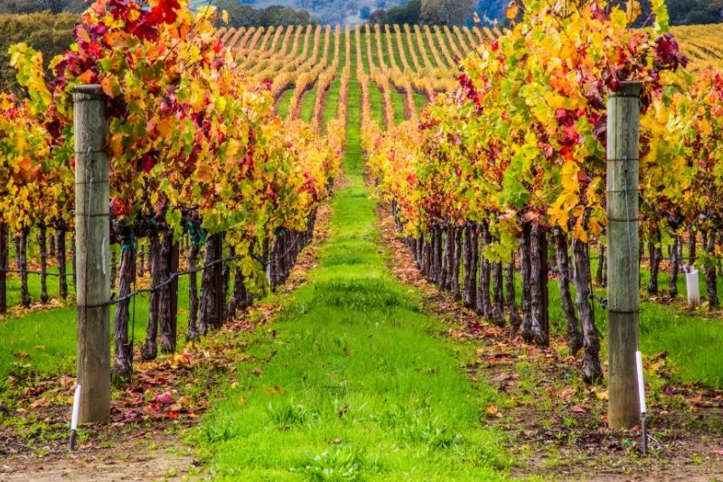 Napa and Sonoma Wine Country - Full-Day Tour from San Francisco
