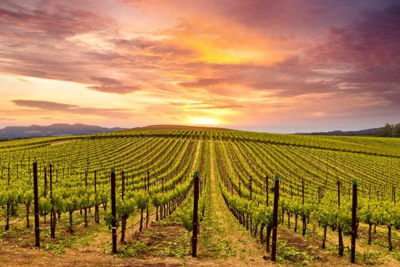 Napa and Sonoma World-Class Wine Tour with Lunch