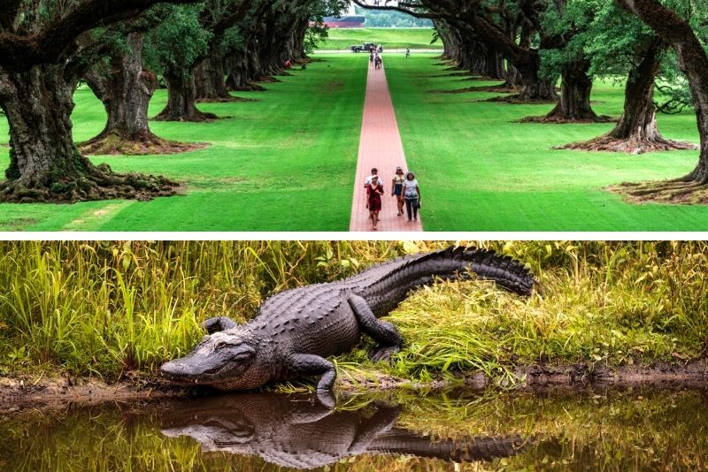 N'awlins Luxury Laura, Oak Alley or Whitney Plantation with Swamp Tour