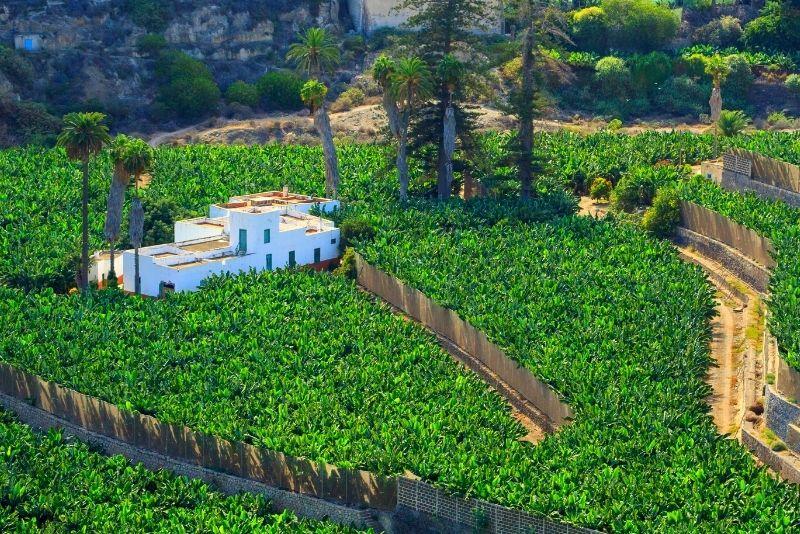 Gran Canaria settentrionale