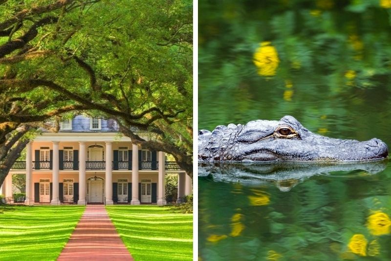 Oak Alley Plantation and Swamp Boat Tour from New Orleans