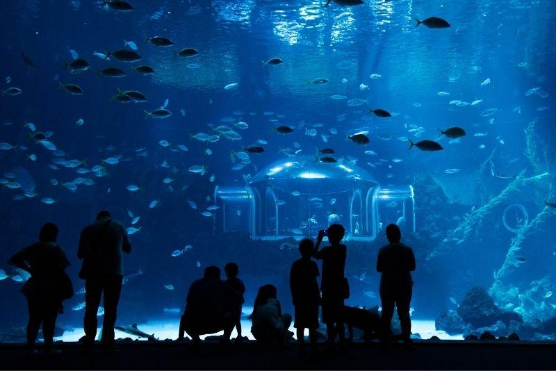 Poesia dell'acquario marino, Gran Canaria