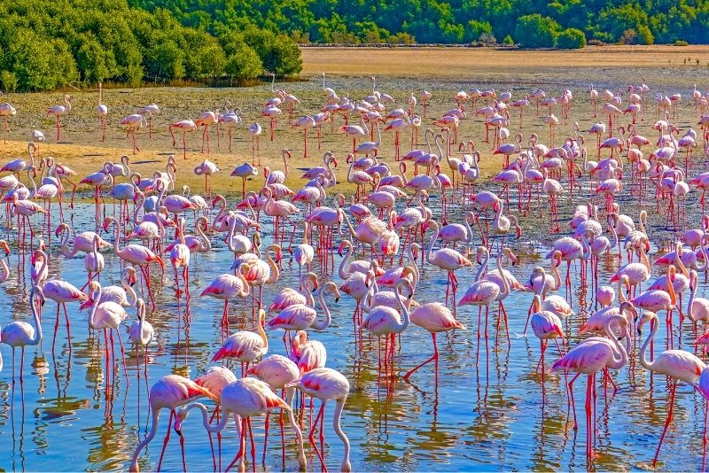 Santuario de vida salvaje de Ras Al Khor
