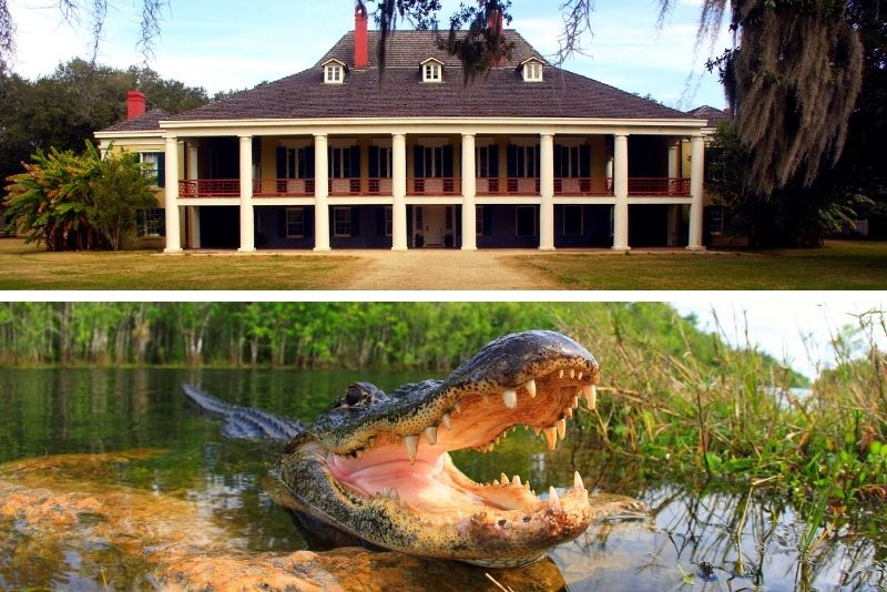 Swamp tour and Destrehan Plantation tour