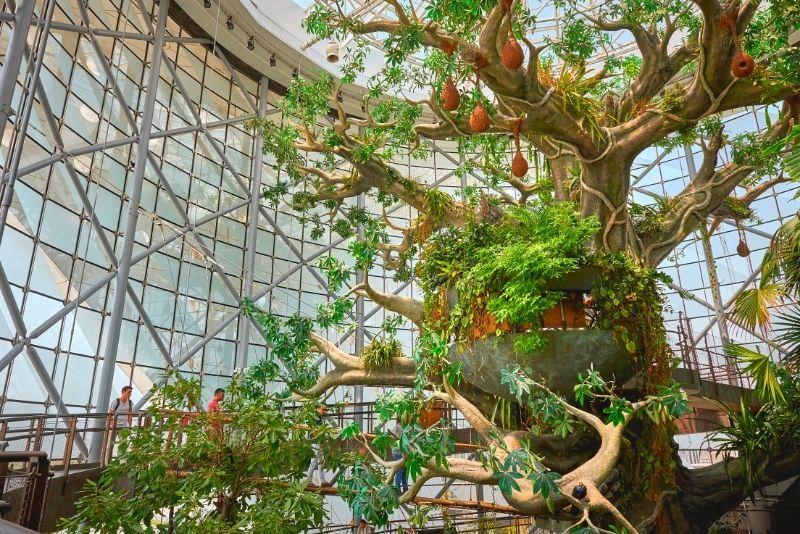 The Green Planet, Dubai