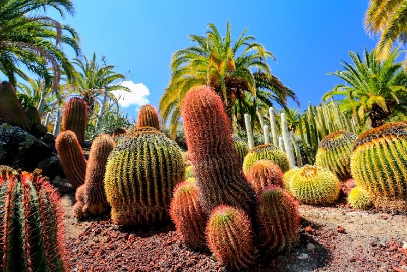 Giardino botanico di Viera e Clavijo, Gran Canaria
