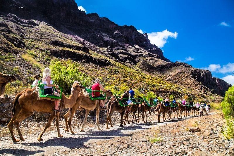 cammello a Gran Canaria