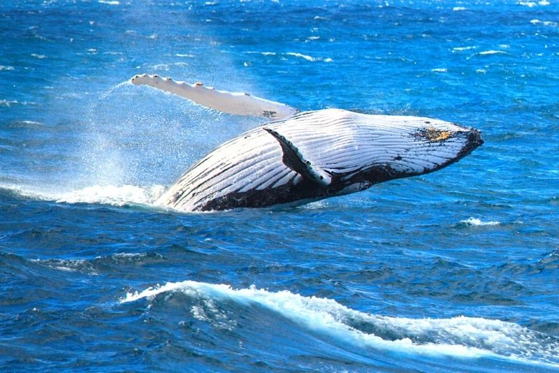 Cairns whale-watching cruise