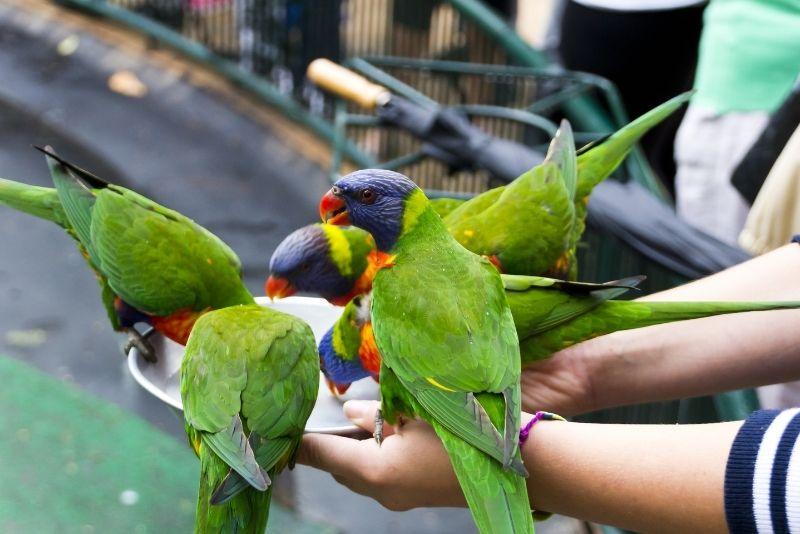 colorful lorikeets at Currumbin Wildlife Sanctuary
