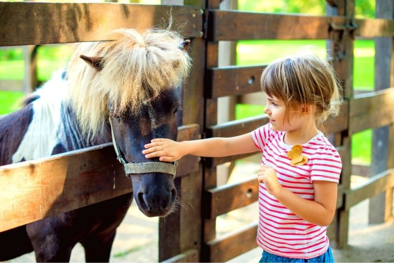 HorsePower for Kids & Animal Sanctuary, Tampa