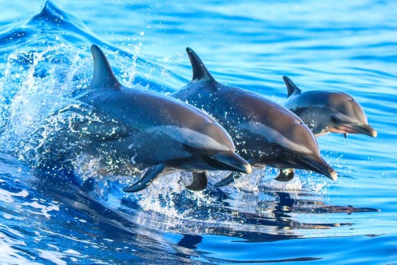 dolphin watching from Brisbane