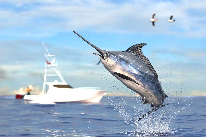 fishing in Tampa