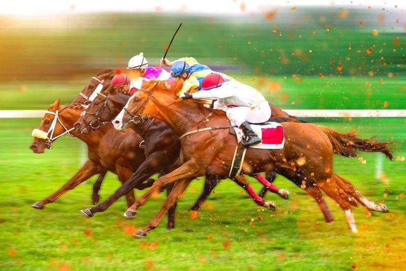 horse racing at Tampa Bay Downs