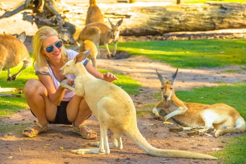 kangaroos at Caversham Wildlife Park
