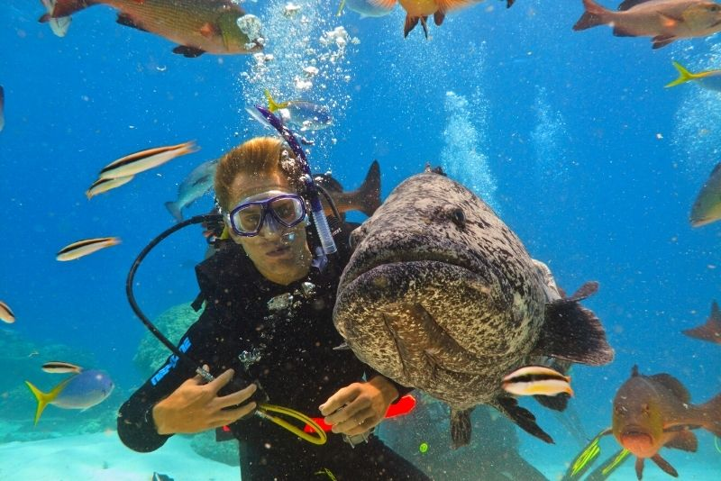 scuba diving in Airlie Beach