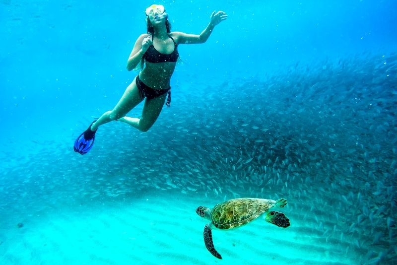 swim with turtles at Cook Island
