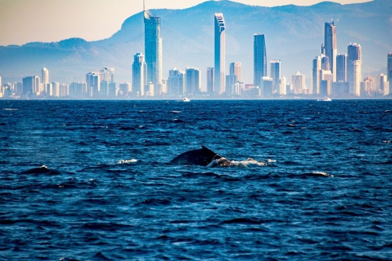 whale-watching cruise in Gold Coast