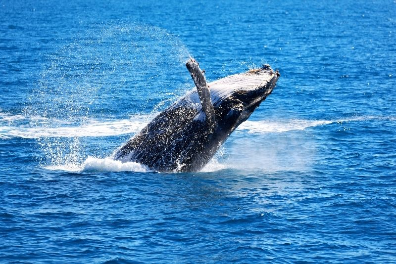 whale watching from Perth