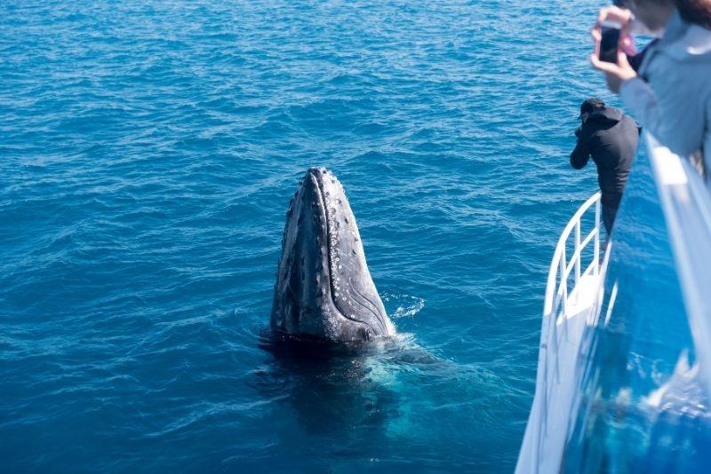 whale watching in Brisbane