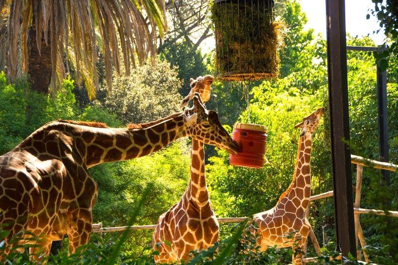 Bioparco Zoo, Rome