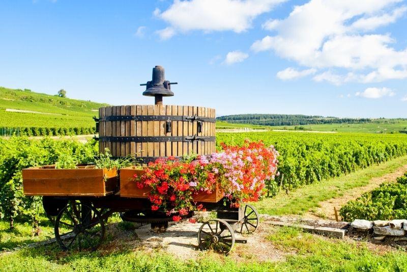 Visite des vins de Bourgogne au départ de Paris