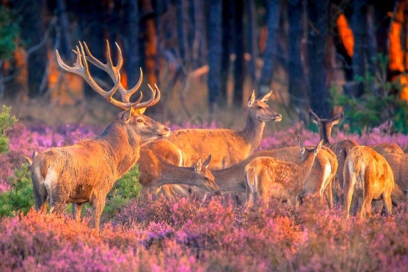 Parque Nacional Hoge Veluwe, Países Bajos
