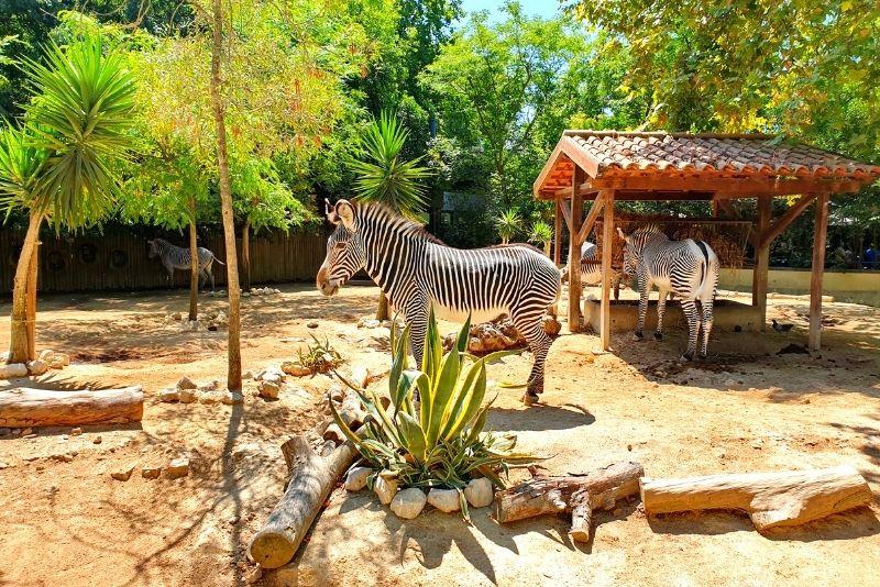 Zoo von Lissabon
