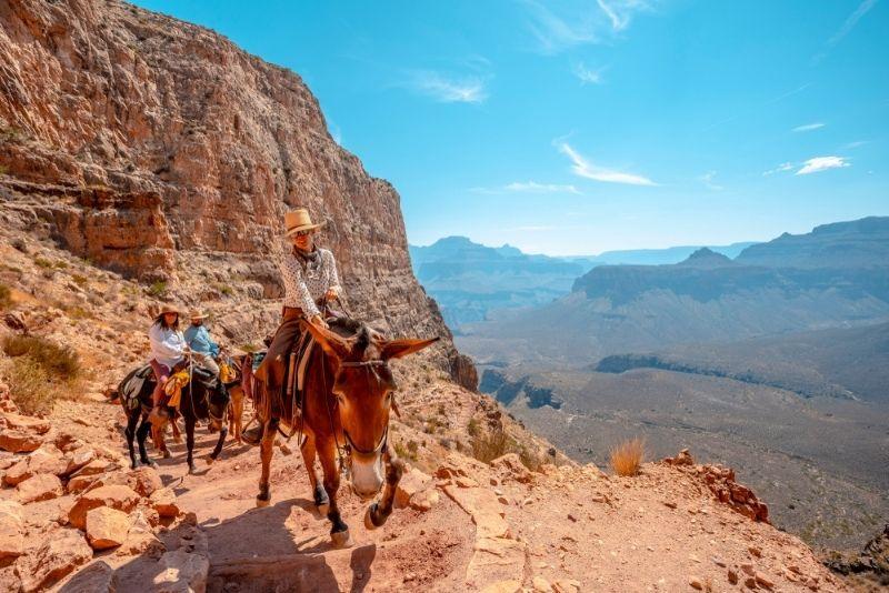 Mule Trips Grand Canyon