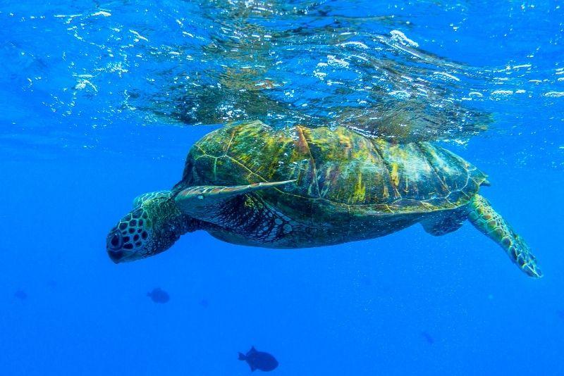 Turtle Canyon, Oahu, Hawaii