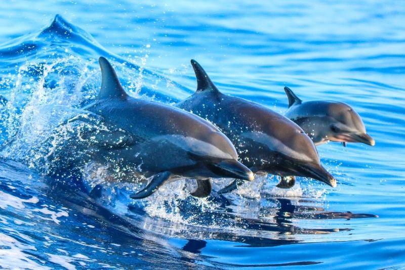 Delfinbeobachtung in Lissabon