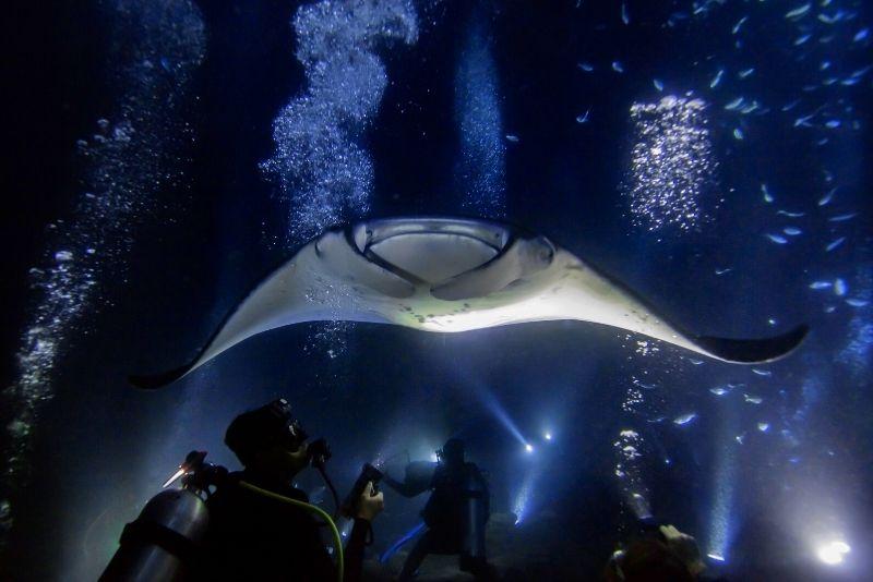 manta rays night diving in Oahu